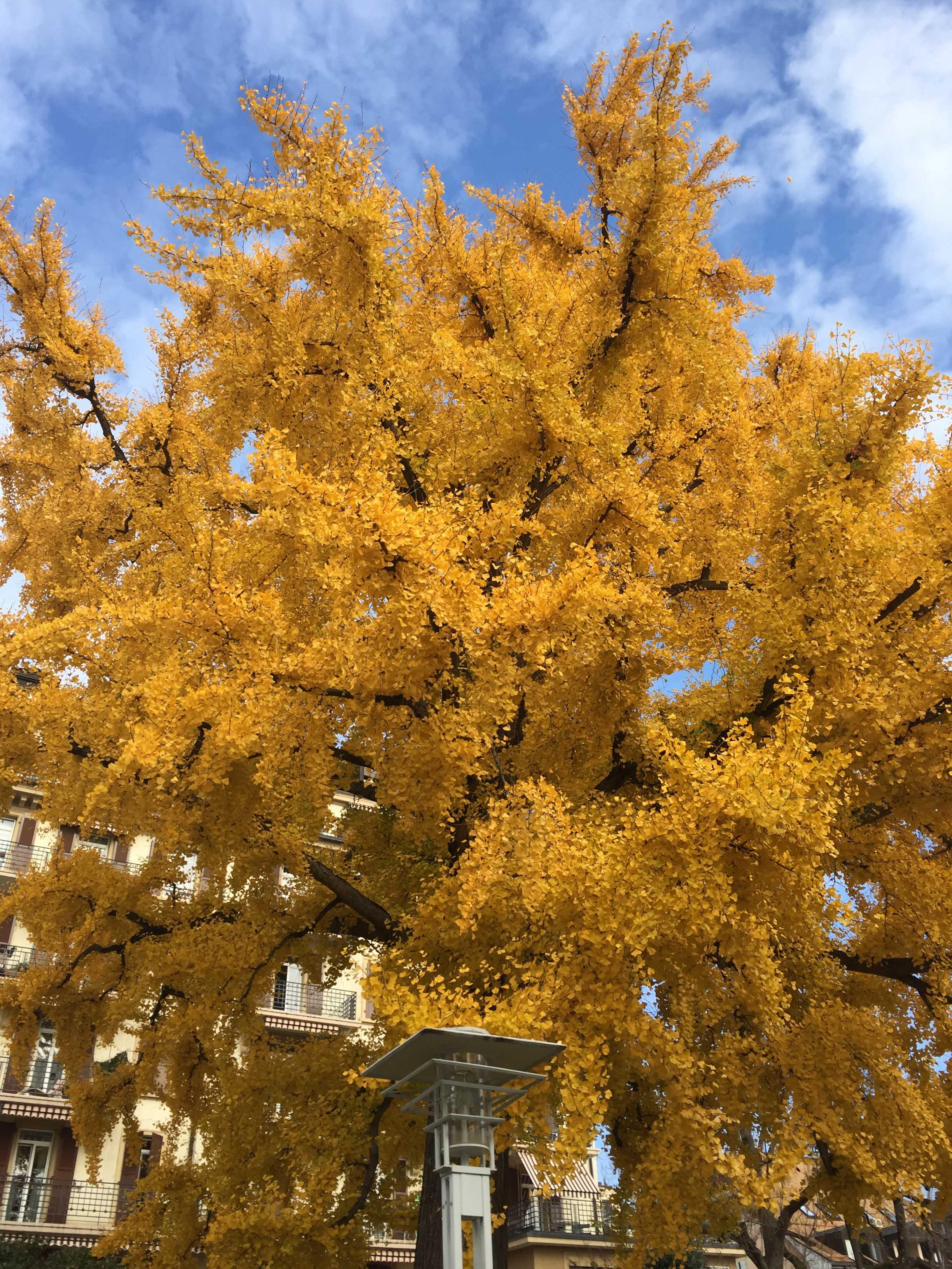 Der Herbst wird heiß – für dich und dein Buch