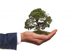 Verantwortung symbolisiert durch Baum in Hand